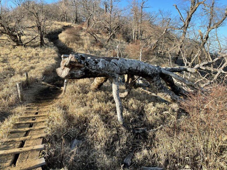 イグアナのような枯れ木