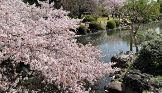 満開の桜が美しい新宿御苑【2021年は事前予約入場】