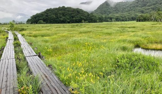 【群馬県利根郡】湖畔のキンコウカの黄色い花が美しい尾瀬ヶ原
